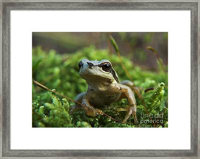 Frog Framed Print by Odon Czintos