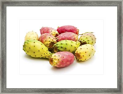 Fruits Of Opuntia Ficus-indica  Framed Print by Fabrizio Troiani