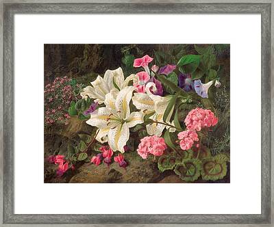 Golden-rayed Lily Of Japan Framed Print by William Ford