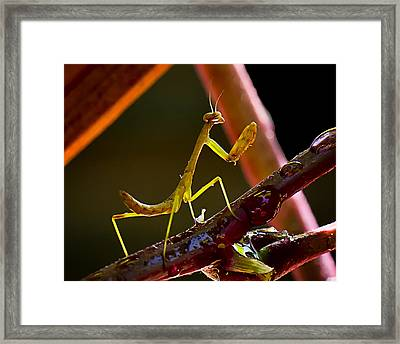 Guardian Of The Rose  Framed Print by Michael Putnam