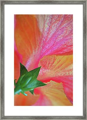 Hibiscus Framed Print by Kathy Yates