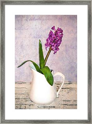 Hyacinth Framed Print by Kathy Jennings