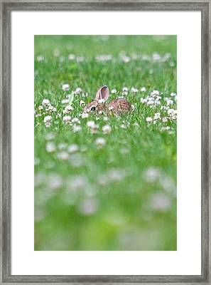 Framed Print featuring the photograph  I See You by Scott Holmes