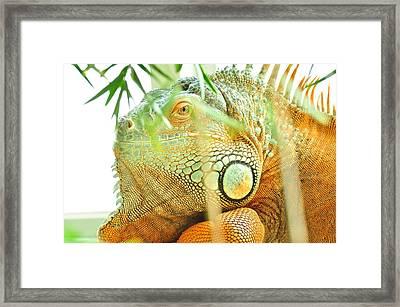 Iguana Framed Print by Puzzles Shum