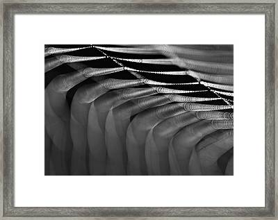 Framed Print featuring the photograph  Light Web by Odon Czintos