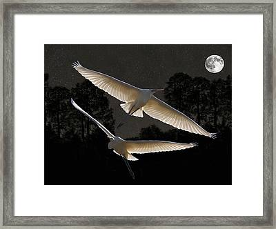 Majestic Great Egrets  Framed Print by Eric Kempson