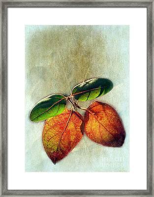 Memory Of Leaves Framed Print by Judi Bagwell