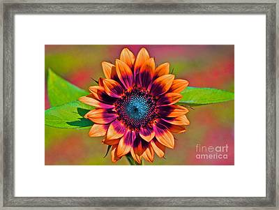 Orange Flowers In Their Buttonholes Framed Print by Gwyn Newcombe