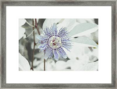 Framed Print featuring the photograph  Passion Flower On White by Tom Wurl