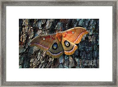 Polyphemus In Morning Light Framed Print by Deborah Johnson