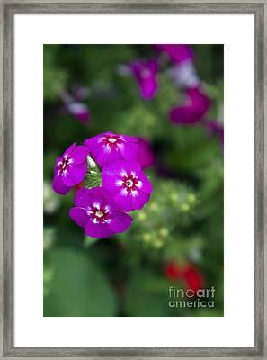 Pretty Flower Framed Print by Patty Malajak