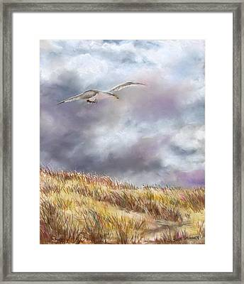 Seagull Flying Over Dunes Framed Print by Jack Skinner