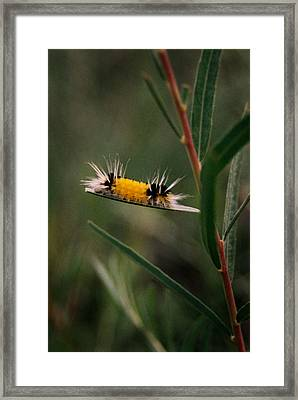 Struttin Your Stuff Framed Print