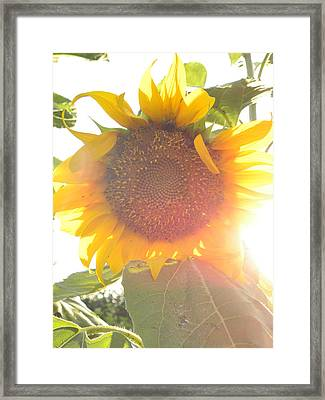 Framed Print featuring the photograph  Sun Flower by Nada Meeks