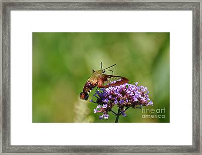 Take A Sip Framed Print by Suzanne Handel