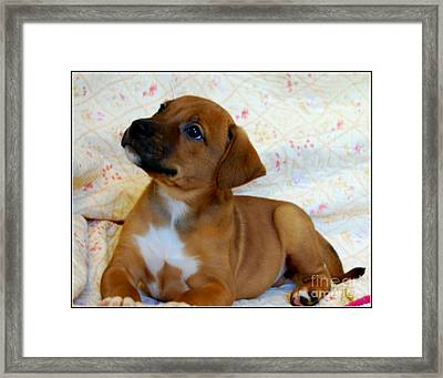 Framed Print featuring the photograph   Take Me Home Please by Peggy Franz