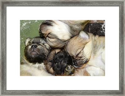 The Gang   Cute Puppies Framed Print by Peggy Franz