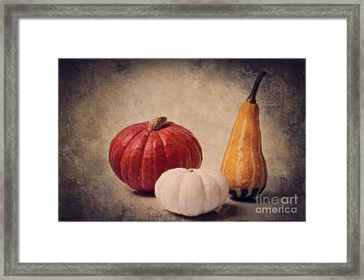 Three Pumpkins Framed Print by Angela Doelling AD DESIGN Photo and PhotoArt
