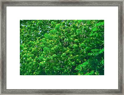 Tibit Tree Framed Print by David Alexander