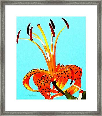 Turquoise And Tiger Lily Framed Print
