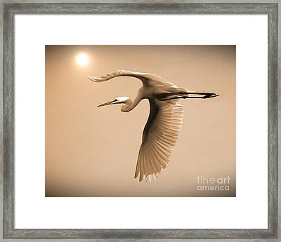 Who Needs Planes Framed Print