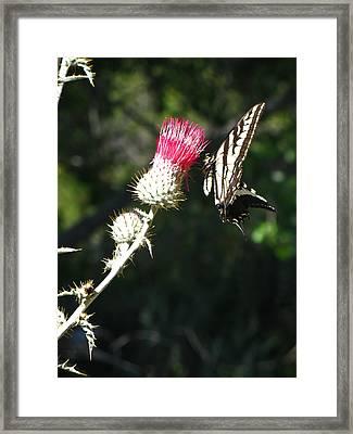 Wilderness California Fine Art Print Framed Print by Ian Stevenson