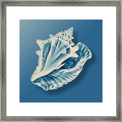 X-ray Of A Conch Shell Framed Print