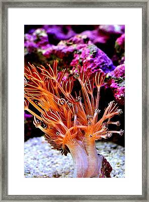 Framed Print featuring the photograph  Xenia Elongata by Puzzles Shum