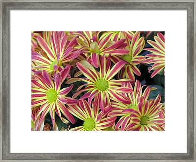 015 Pink And Yellow Flowers Framed Print by Carol McKenzie