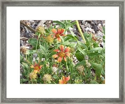 021 Wild Flowers Framed Print by Carol McKenzie