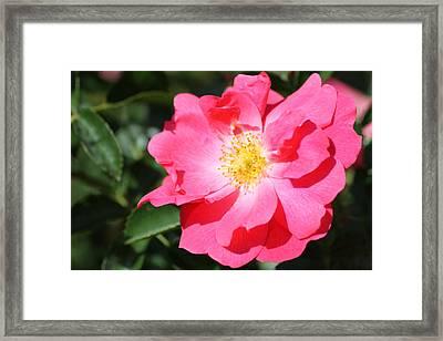 06182012 012 Framed Print by Mark J Seefeldt