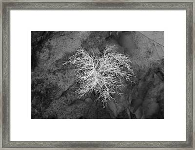 0802-0013 Reindeer Lichen In The Smith Creek Preserve Framed Print by Randy Forrester