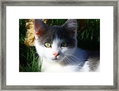 080611 Flossy 19 Framed Print