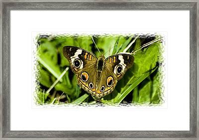 081212-22 Framed Print by Mike Davis
