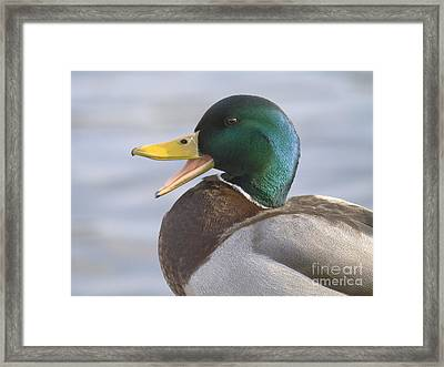 Duck Portrait Framed Print by Odon Czintos