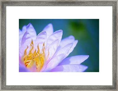 Framed Print by Kicka Witte