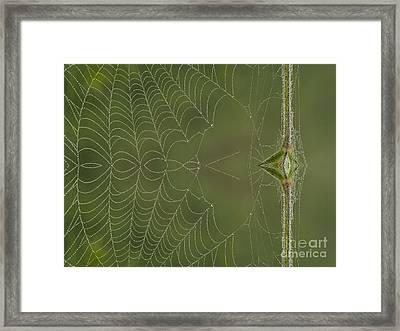 Web Reflection Framed Print by Odon Czintos