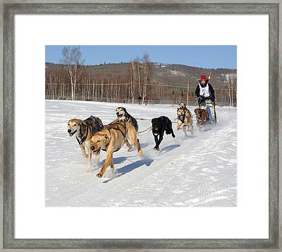 2010 Limited North American Sled Dog Race Framed Print