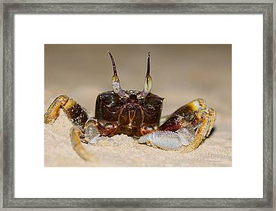 A Crab On The Shore  Framed Print by Ulrich Schade