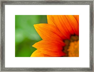 A Little Shy Framed Print