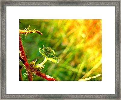 Framed Print featuring the photograph A New Morning by Debbie Portwood