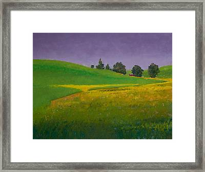 A Sliver Of Canola Framed Print by David Patterson