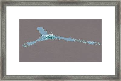 Activated Platelet, Sem Framed Print by Steve Gschmeissner