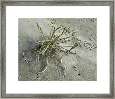 Framed Print featuring the photograph Adaptation by I'ina Van Lawick