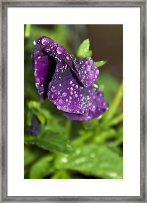 After Rain Framed Print by Svetlana Sewell