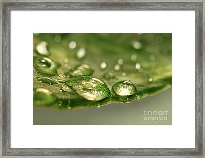 After The Rain Framed Print by Sandra Cunningham
