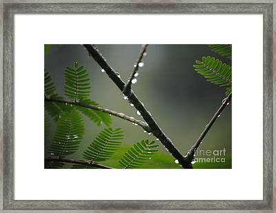 After The Storm Framed Print by Tamera James