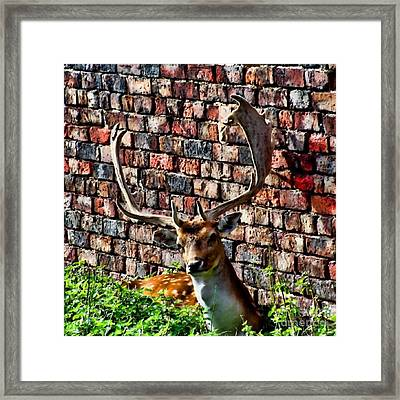 Against The Wall Framed Print by Isabella F Abbie Shores FRSA
