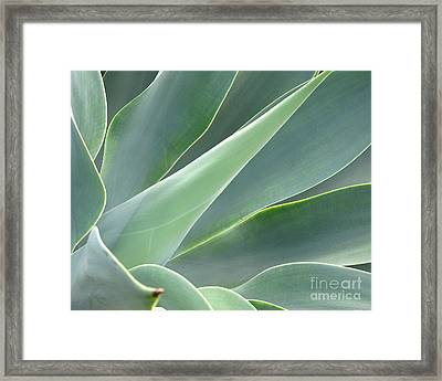 Framed Print featuring the photograph Agave by Ranjini Kandasamy