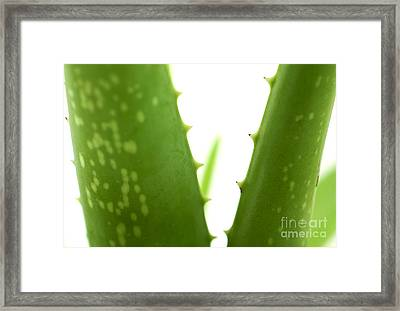 Aloe Vera Framed Print by Blink Images